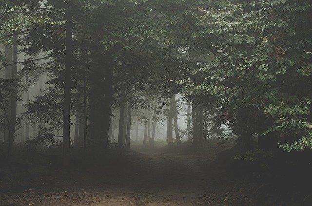 山の中に響いた不思議な声